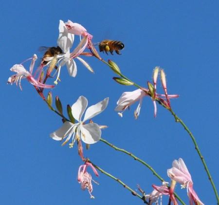 μέλισσα λουλούδι λογισμοί