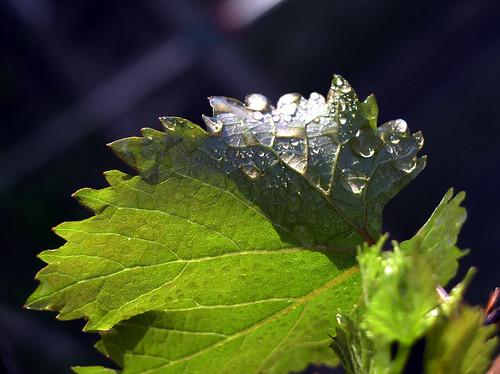 Raindrops by Jason A. Samfield