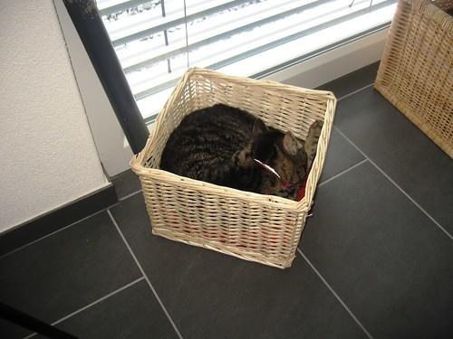 Katze im Korb 2
