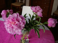 Peonies - Day 4