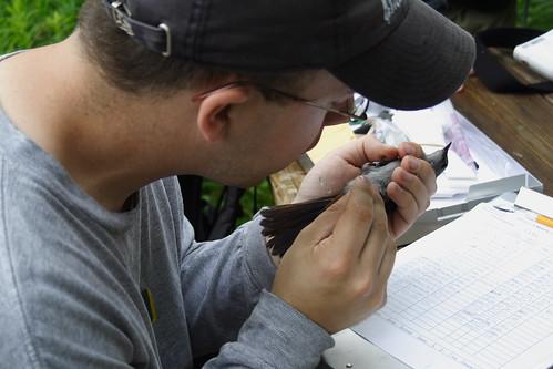 Taking the Avian Flu Sample