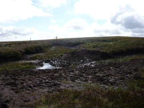 The start of the bogs