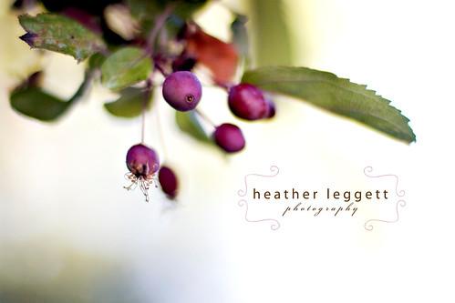 Leaves & berries 2 WM