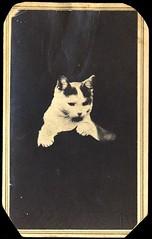 Cat / opaque background