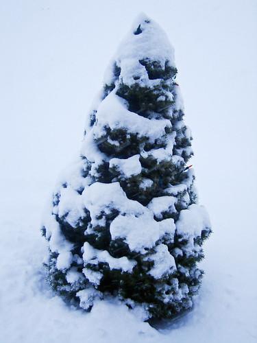 Wee Snowy Tree