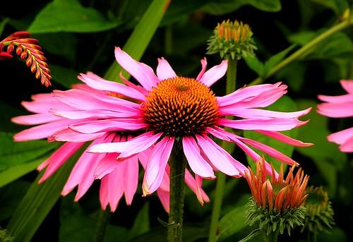 Flower in Fremont (Foto op Flickr van hopeisalot)