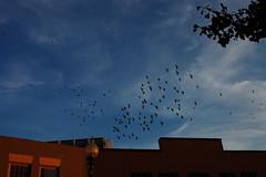 flight of birds no. 3