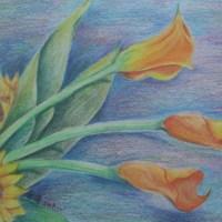 色鉛_太陽花與海芋