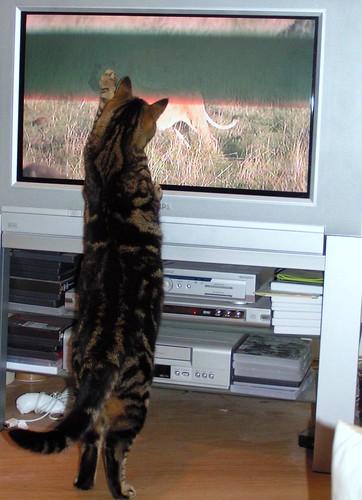 Martha vs the Big Cats!