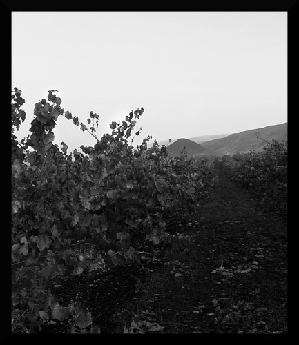 vineyards6edit