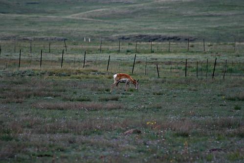 biglake_antelope