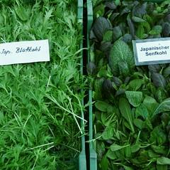 Mein Biogärtner 7_2009 02 13_8455