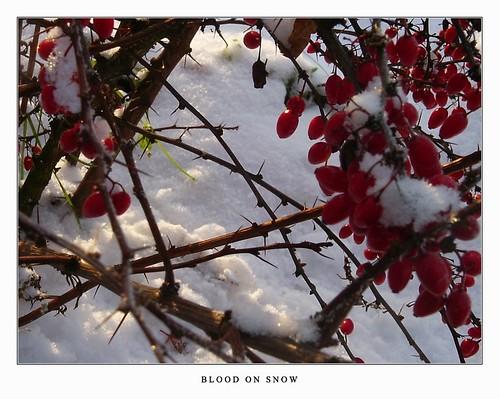 Blood_On_Snow___by_Nilja