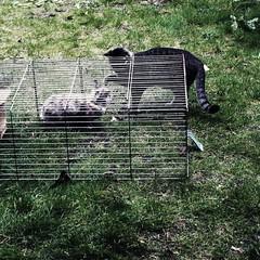 hunter and prey 165