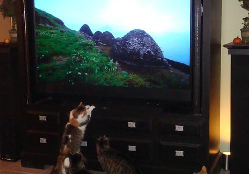 CatsWatchingTV