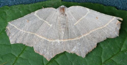 moth163