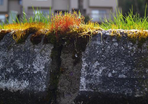 I Love Moss
