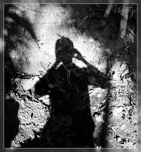 Shadow VZN107