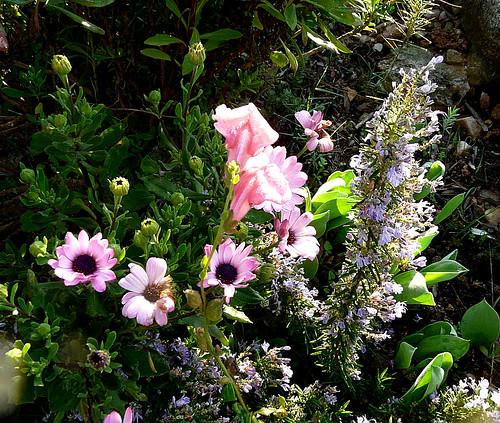Mediterranean garden in February by Marlis1.