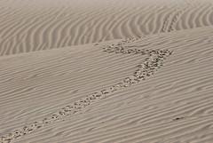 Oceano Dunes 5