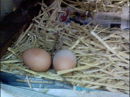 Our first two eggs from honey, our batte