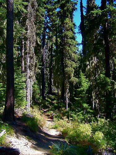 Trail 404 to Blossom Lake