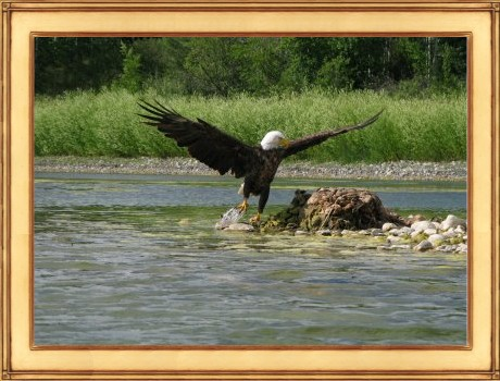 Cicero-Eagle