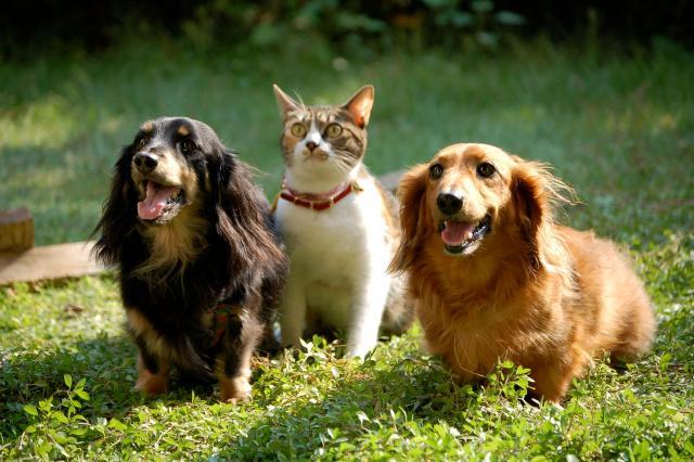 「犬猫 フリー画像」の画像検索結果