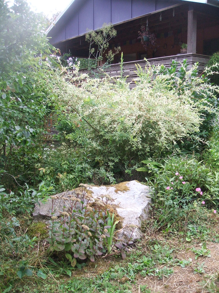 Big rock and Japanese willow