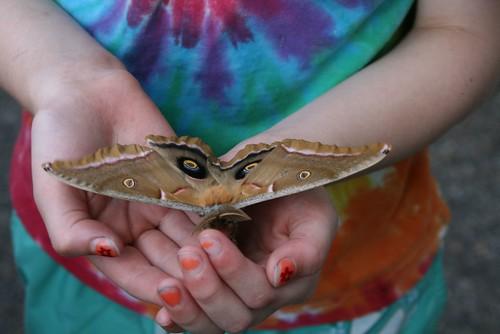 2008-06-19-moth13