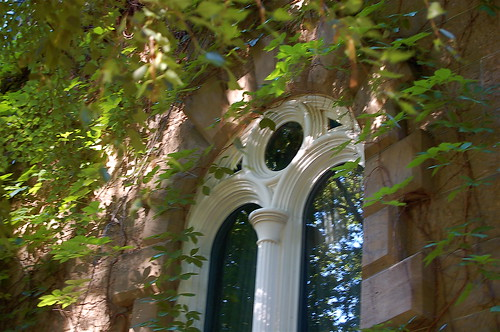 Capitol Arch and Green Lacy Leaves by you.