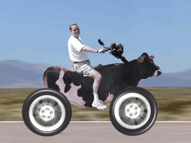 Cow saki