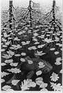 M. C. Escher. Tres mundos. 1955.