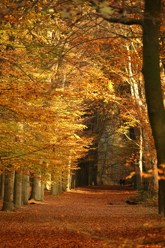 Autumncolors in Spanderswoud