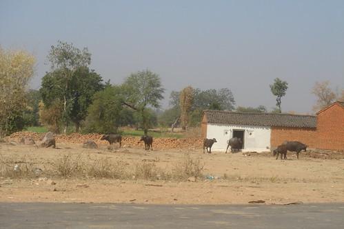 Khajuraho 路上1-8鄉下