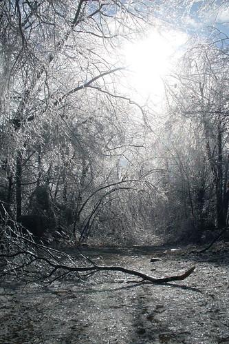 Ice Covered World by mamomof5.