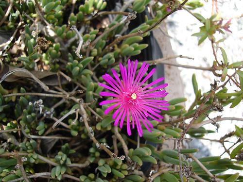 Unidentified dainty flower
