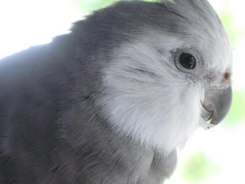 Peeps profile