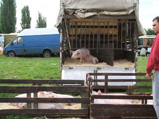 DSCF6032 dierenmarkt