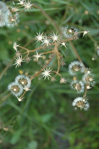 constellation of seeds