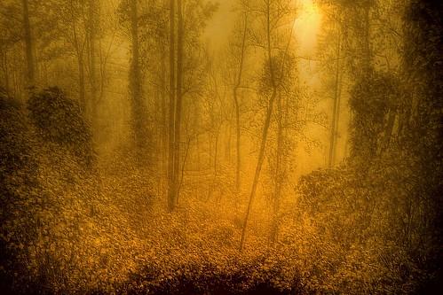 The Misty Jungle