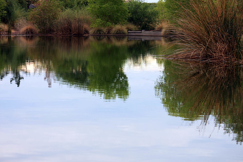 Rio Salado, Habitat Restoration by cobalt123.