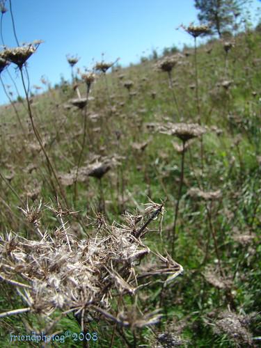 Weeds 1 - sig