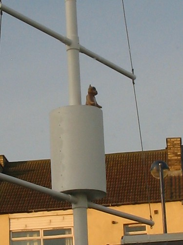 Pirate Cat in Crows Nest, Redcar