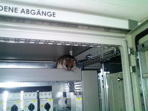 Maus im Schaltschrank 2