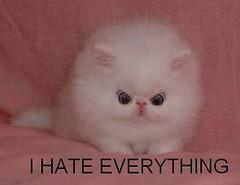 funny_cats_a