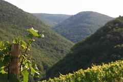 Wein und Wald an der Ahr