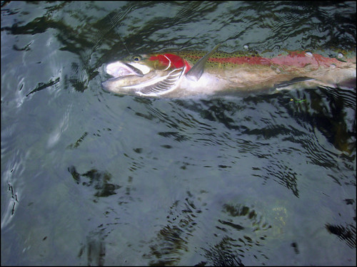 Money shot - Cliped fish