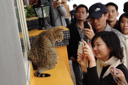 Kitty Fan Club
