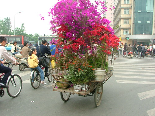 Flower Tricycle
